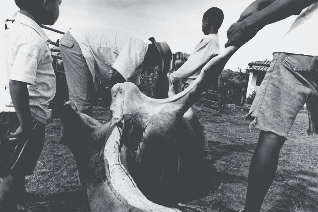 No Brasil, o manejo dos bovinos ainda é muito brutal