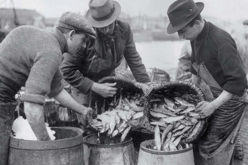Muita gente que come carne de peixe se considera vegetariana