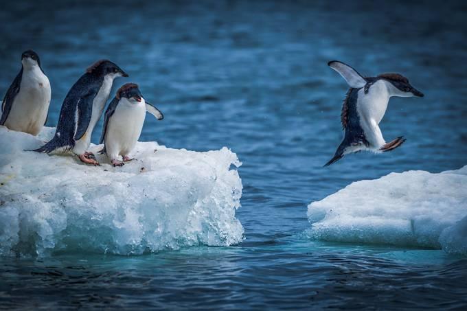 Que bichos vivem na Antártida?