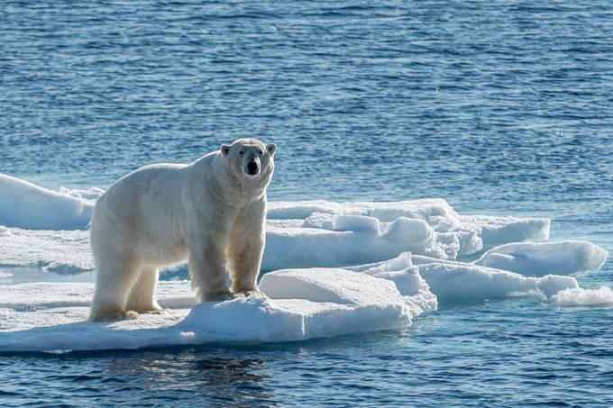 Por que não existe urso no Pólo Sul e pinguim no Pólo Norte?