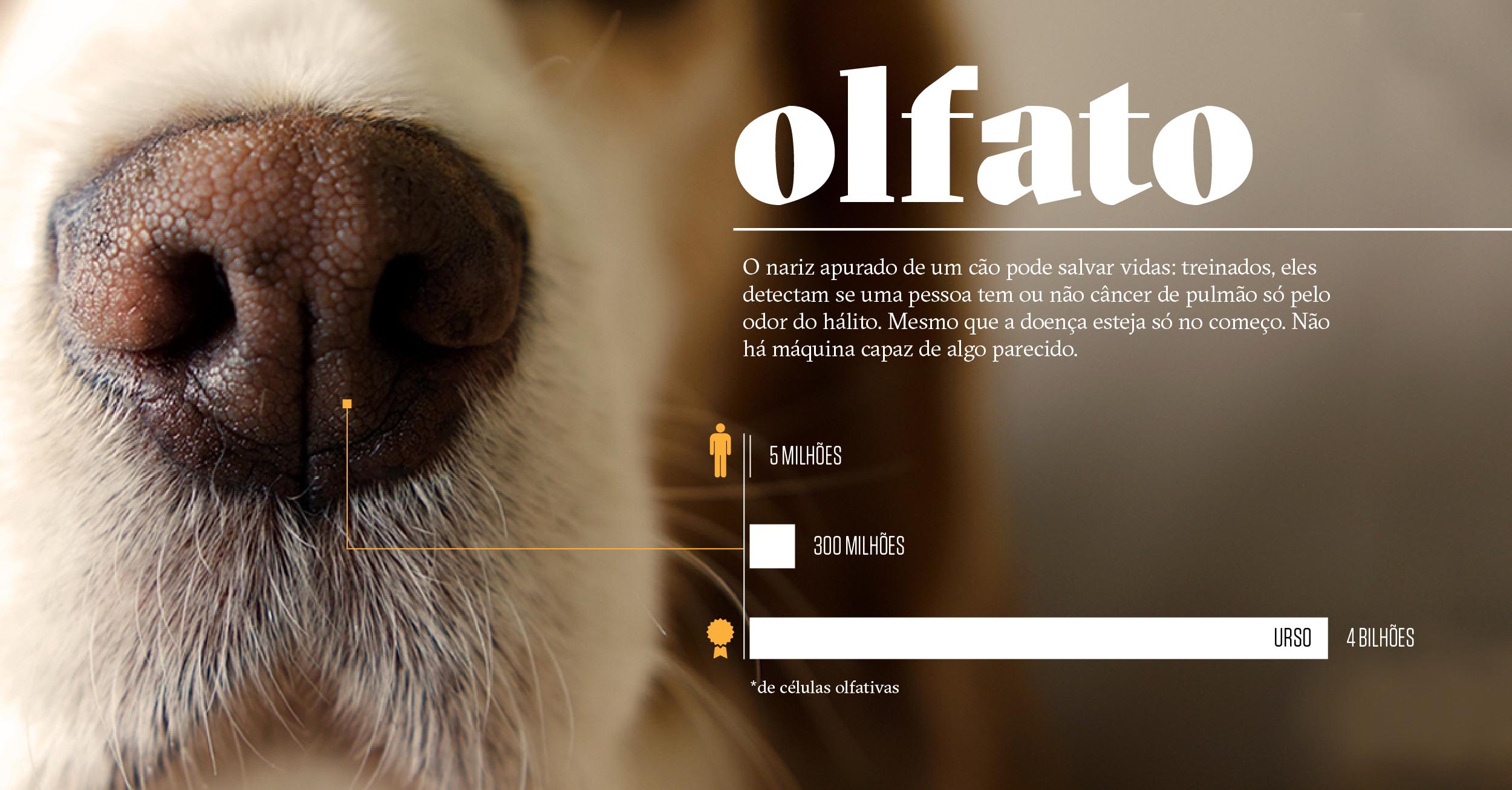 Como os animais realmente enxergam o mundo: olfato