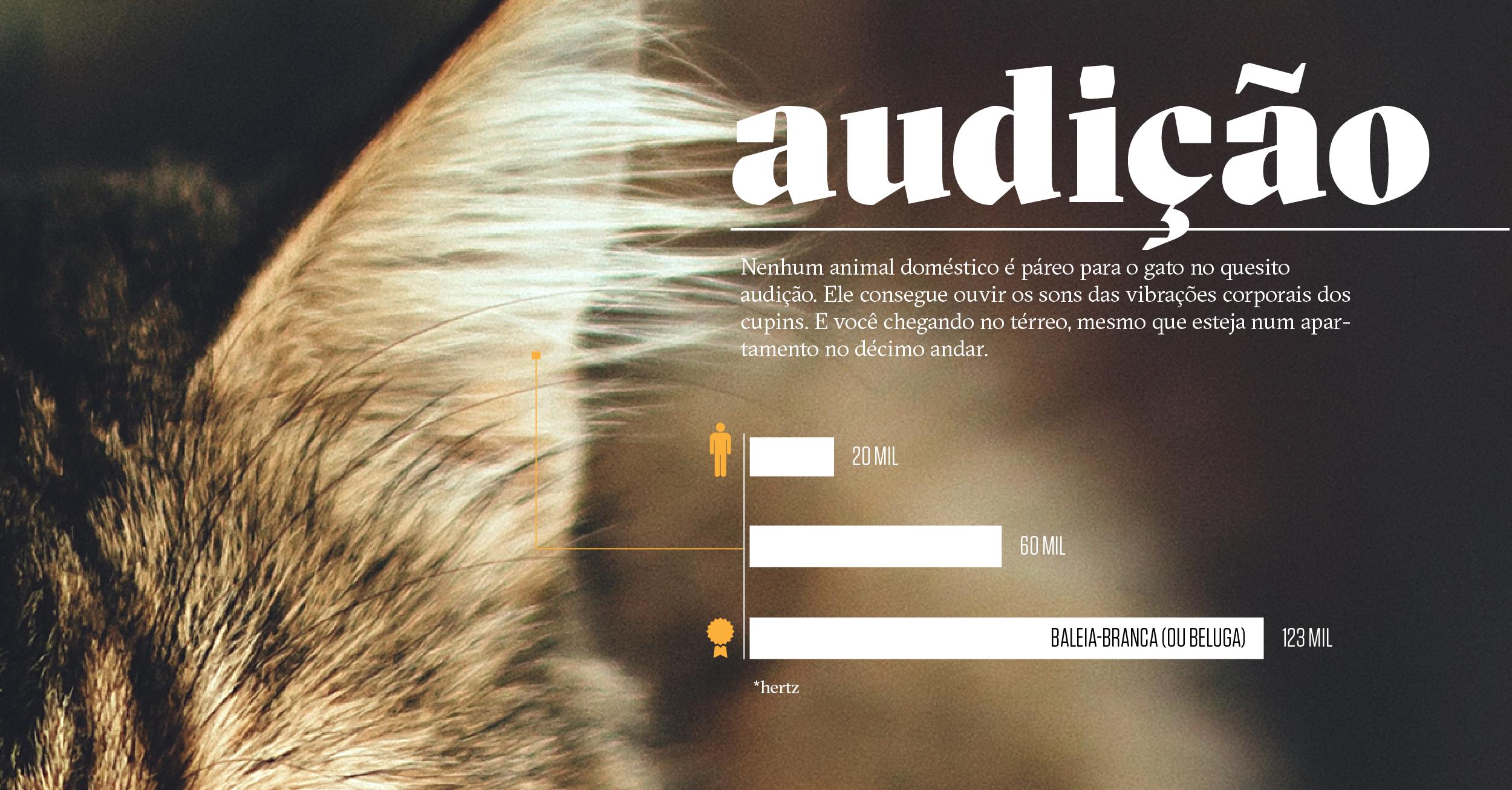 Como os animais realmente enxergam o mundo: audição