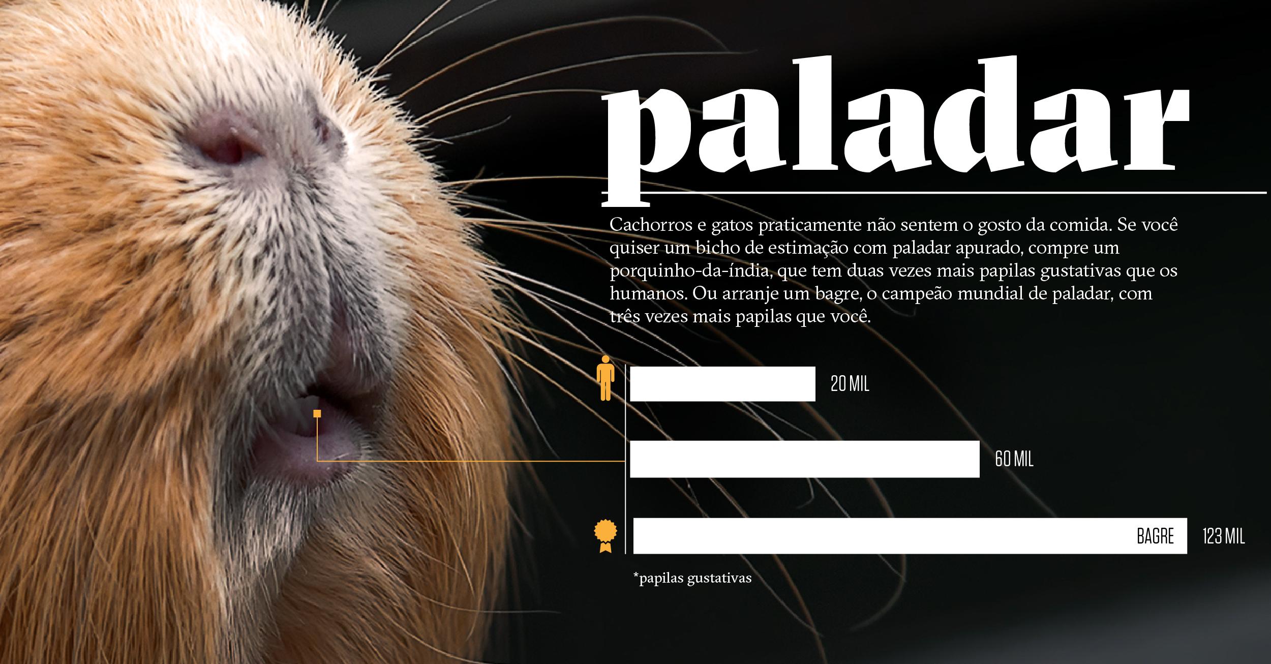 Como os animais realmente enxergam o mundo: paladar