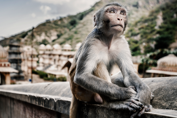 Implante controla pensamento de macacos