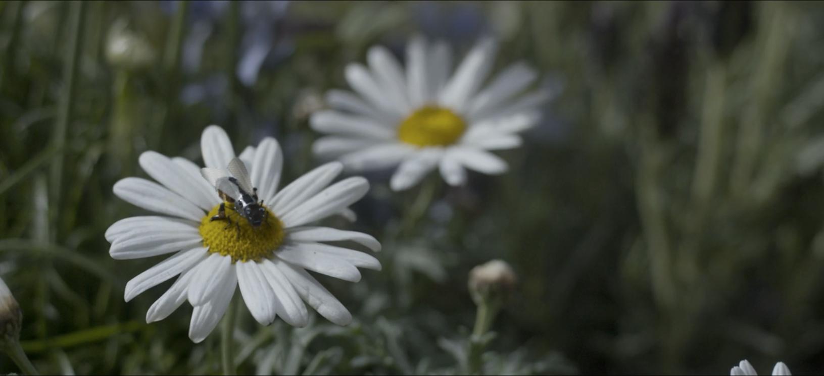 Estamos quase criando abelhinhas como essa. Vamos torcer para elas não se tornarem assassinas.