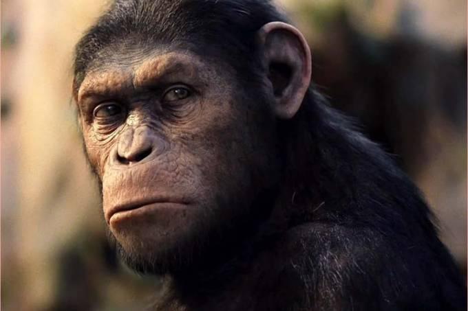 Macacos fazem ferramenta as descartam depois
