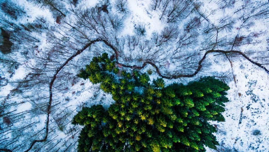 """O registro vencedor em """"Natureza"""" foi feitopor Michael B. Rasmussen, um fotógrafo dinamarquês. A imagem registra uma floresta emNaestved, cidadela local."""