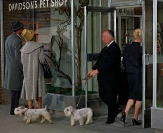 O diretor aparece em uma de suas obras primas, <i>Os Pássaros</i>, passeando casualmente em frente a uma loja de animais domésticos com seus dois cachorros, Geoffrey e Stanley. Veja em 0:02