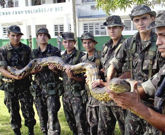 SUCURI (Eunectes Boidai) - É a maior serpente do mundo. Pode chegar a 250 quilos.