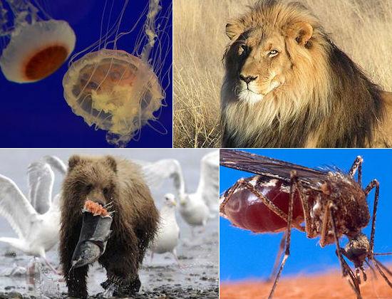 Se algum dia você se deparar com algum animal dessa lista, pode ficar com medo. Veja quais são os animais mais perigosos do mundo.