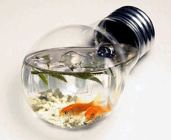 Outro exemplo de aquário feito com uma lâmpada queimada.