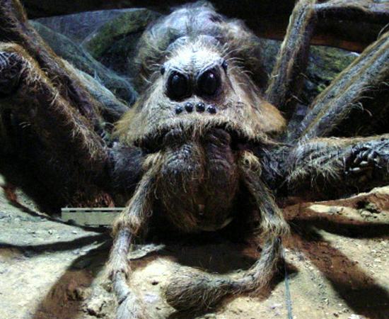 Em Harry Potter e a Câmara Secreta (2002), Rony e Harry encontram a gigantesca aranha Aragogue na Floresta Proibida.