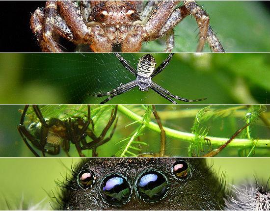 Venenosas e horripilantes, as aranhas conseguem, muitas vezes, causar pânico por onde passam. Confira a seguir 10 espécies bizarras desse aracnídeo (apenas se você não tiver aracnofobia, claro).