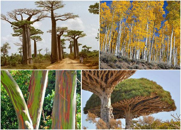 Elas podem ser enormes, ter formatos bizarros e viver milhares de anos. Conheça 10 árvores incríveis que estão espalhadas pelo mundo.