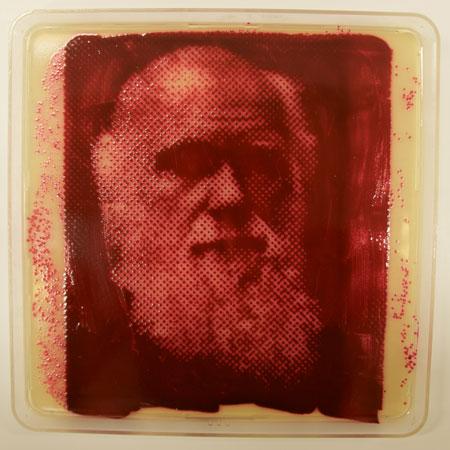 A mesma bactéria serviu como base para construir este retrato de Charles Darwin.