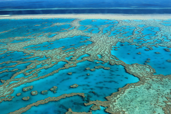 A Grande Barreira de Corais, na Austrália e Papua-Nova Guiné, é conhecida por ser a maior estrutura construída por organismos vivos. Ao todo, são quase três mil recifes, 60 ilhas e 100 atóis.