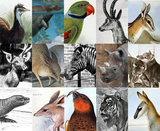 A lista de animais que já passaram pela Terra é enorme. Nos últimos 250 anos, muitos bichos sumiram do mapa graças à ação de predadores ou à caça. Conheça agora alguns destes animais - que você provavelmente nunca mais verá vivos.