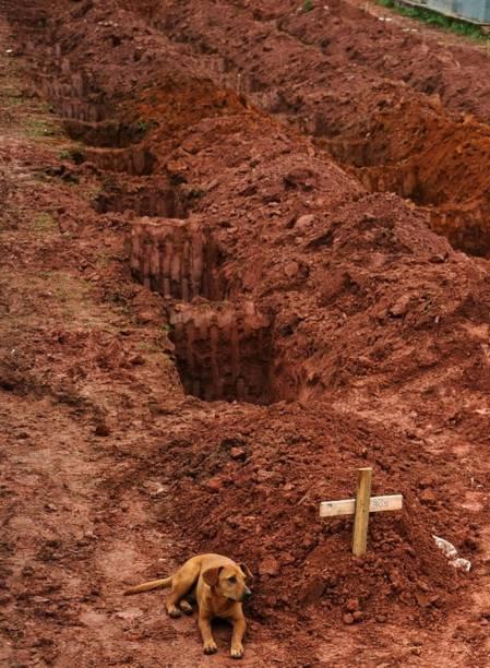 Este é ocachorro Leon, flagrado pelo segundo dia consecutivo no túmulo do seu dono, morto num desastroso deslizamento de terra no estado do Rio de Janeiro.