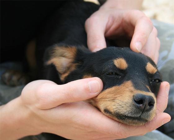 As sementes de maçã e de pera contêm arsênico, que pode ser fatal para os cães. Falando em cães, aquele focinho sempre molhado serve para ele coletar mais gotículas de odor dos elementos químicos do ar.