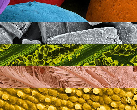 A fotógrafa Caren Alpert resolveu fotografar comidas em visão microscópica para juntar três de suas paixões: comidas, tecnologia e fotografia. O resultado são fotos impressionantes, que revelam texturas e cores que não vemos a olho nu em nossos alimentos.