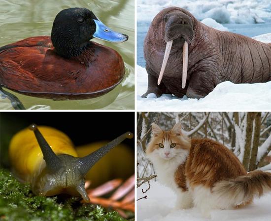 Clique em Leia Mais para ver a lista dos animais mais bem dotados do mundo!