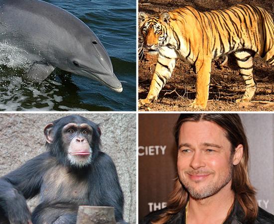 Clique em Leia Mais e veja a lista dos animais mais mal dotados do mundo.