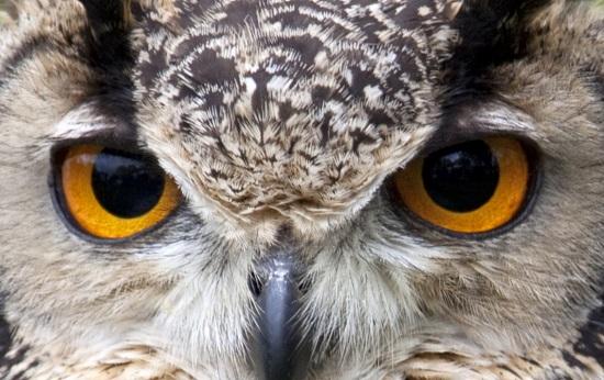 As corujas viram a cabeça num ângulo de 270 graus, têm ótima visão noturna e percebem até sons baixíssimos a uma grande distância.