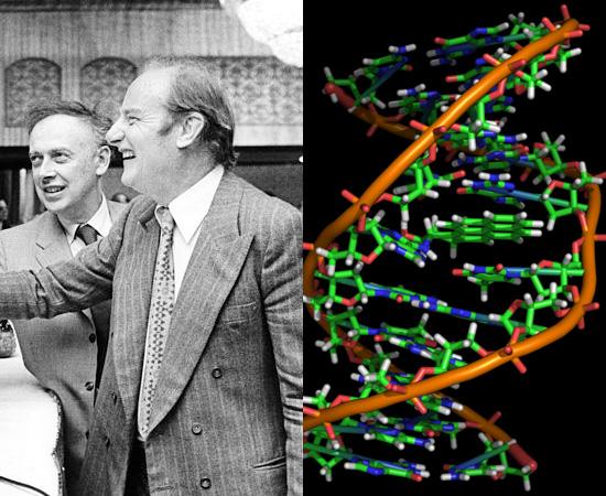 ESTRUTURA DO DNA (1953) - A molécula do DNA foi descoberta pelos pesquisadores James Watson e Francis Crick.