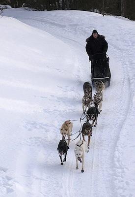 IDITAROD TRAIL SLED DOG RACE <BR>