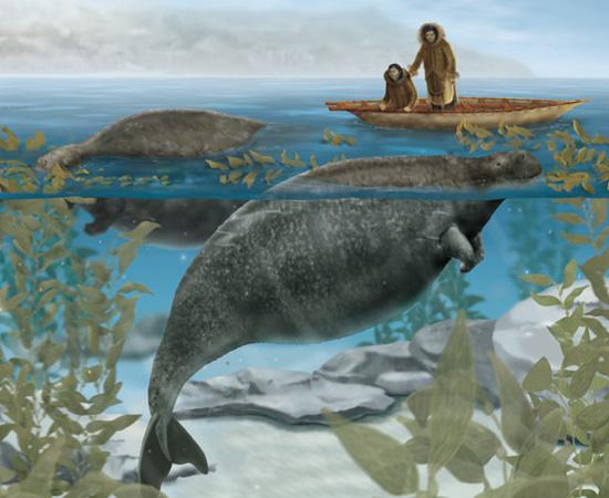 Dugongo de Steller (Hydrodamalis gigas) - extinto em 1768.
