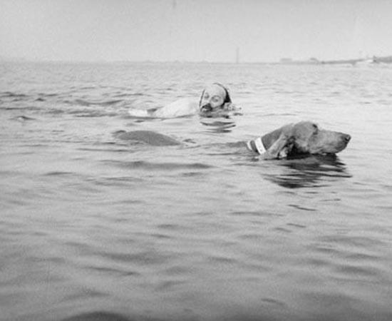 E. L. Doctorow nada com sua cachorra Becky. É um autor americano, conhecido por suas obras recheadas de história e crítica social. Seu livro mais famosa é Ragtime (1975).