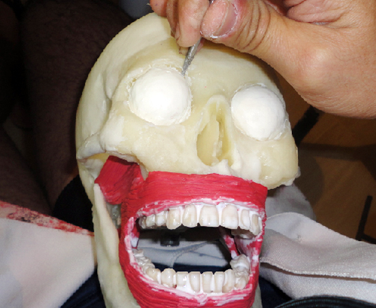 Todos que tiveram contato com as réplicas de peças cadavéricas obtiveram ótimos resultados no teste.