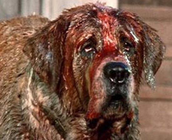 CUJO (Cujo - 1983) - Cujo, um cachorro São Bernardo é mordido por um morcego e infectado com raiva. A partir de então, a família dona do animal é aterrorizada. O filme é baseado no best-seller homônimo de Stephen King.