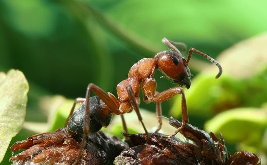 Para alguns cientistas, existem formigas que são capazes de perceber a aproximação de terremotos, alterando seu comportamento para evitar os efeitos do fenômeno.