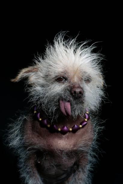 Frodo tem 12anos de idade e é uma mstura decristado chinês com Chihuahua. Seu principal traço depersonalidade é ser bravinha, ela gosta de se impor aos outros cachorros.