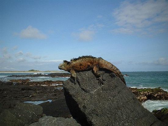 Primeiro Parque Nacional do Equador, Galápagos é um arquipélago famoso graças ao britânico Charles Darwin e a Teoria da Evolução.