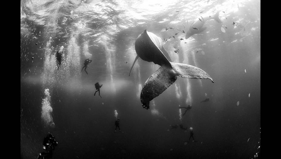 Mergulhadores observam uma baleia-jubarte e seu filhote recém-nascido nadando no Pacífico, pertodas ilhas Revillagigedo, no México. A foto, do fotógrafo e antropólogo mexicano Anuar Patjane Floriuk, foi segunda colocada na categoria Natureza.
