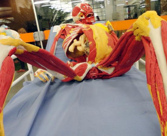 As peças artesanais são feitas com o objetivo de auxiliar o estudo de Anatomia, já que há carência de cadáveres para estes fins.