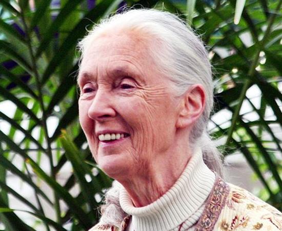 JANE GOODALL (1934)  - Antropóloga e primatologista britânica, conhecida por seus estudos com chimpanzés.