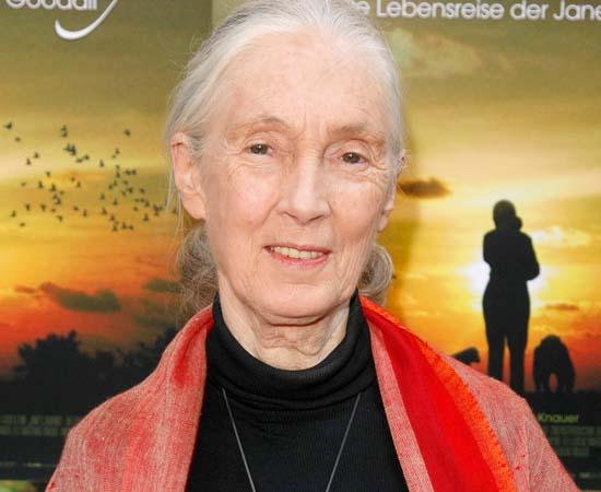 Jane Goodall (1934 - presente) - Primatologista e etóloga britânica, conhecida em todo o mundo por suas pesquisas sobre chimpanzés.