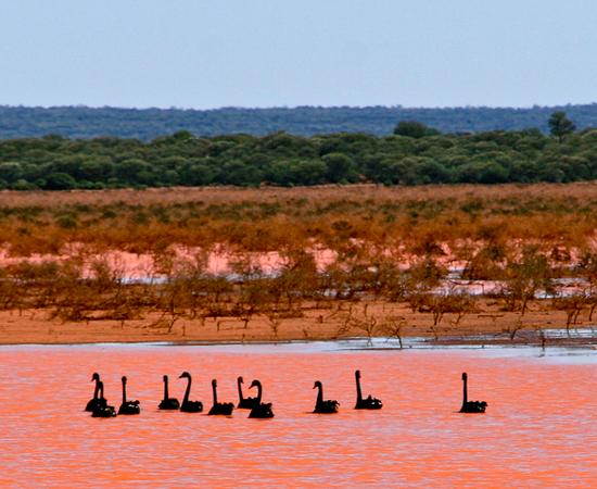 Outra maravilha natural da Austrália é o Lago Rosa, localizado no oeste do país. Ele tem esta cor inusitada por causa da alta concentração de algas e bactérias. Incrível, não?