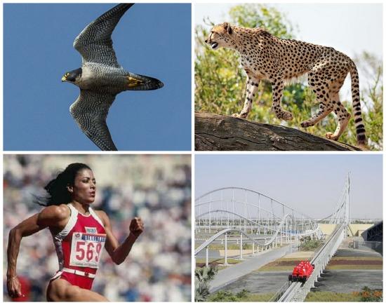 Os mais rápidos do mundo, cada um em sua categoria. Veja os dez seres e coisas que ocupam o topo do ranking de velocidade.