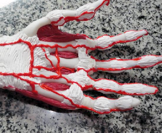 Réplica de mão humana feita pelo fisioterapeuta.