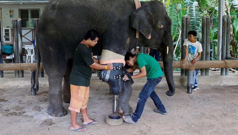 Com a sua perna nova, Mosha consegue fazer caminhadas diárias pela floresta do santuário - e até dar mergulhos no laguinho da fundação, que fica perto da cidade deLampang, no norte da Tailândia.