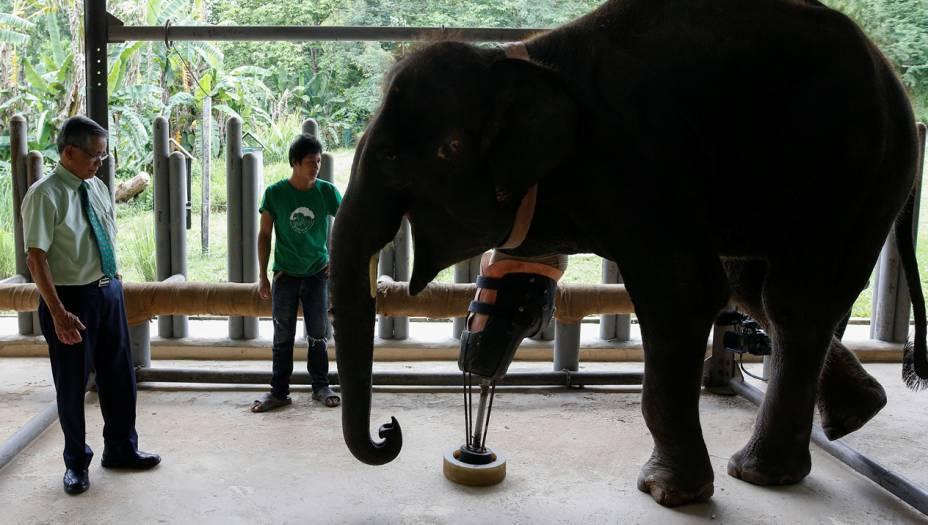 """O Dr. Jivacate (à esquerda, na foto)acredita que Mosha sabe quem é o """"pai"""" da sua perna artificial. """"Toda a vez que eu venho ao hospital de elefantes ela me faz uma saudação com a tromba"""", ele <a href=""""http://www.reuters.com/video/2016/06/30/mosha-the-elephant-gets-her-new-leg?videoId=369121791"""" target=""""_blank"""">contou à Reuters</a>."""
