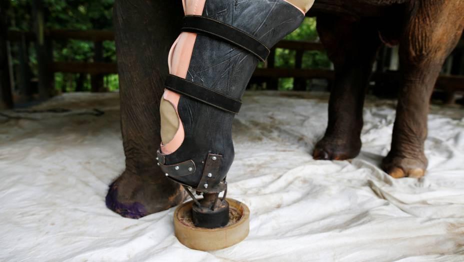Em 2010, em uma visita ao santuário dos Amigos dos Elefantes Asiáticos,Therdchai Jivacate, um veterinário ortopedista, aceitou o maior desafio da sua carreira: criar a primeira perna artificial para um elefante.