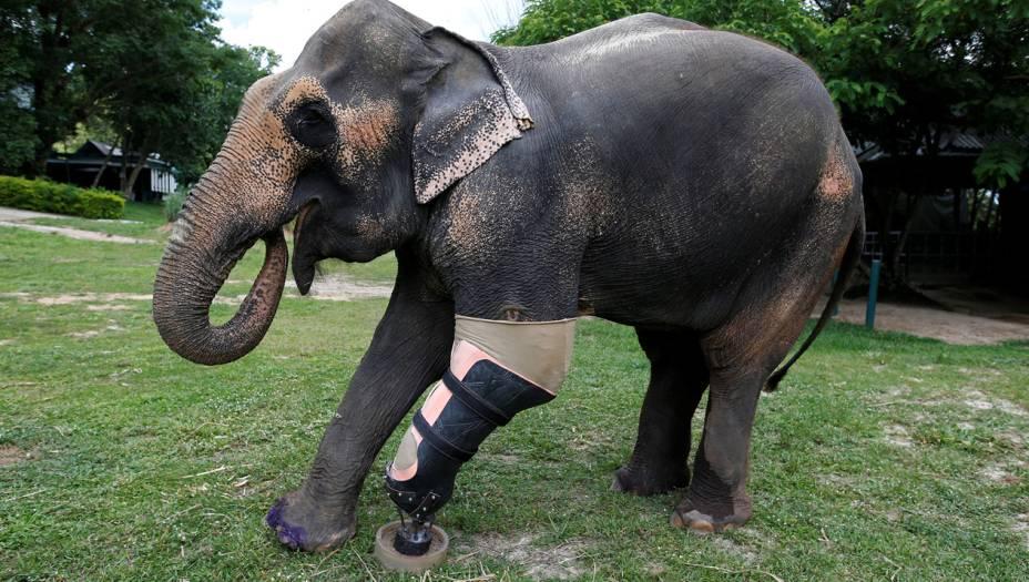 """O """"emprego"""" de Mosha e Motola não existe mais - o governo proibiu o uso de elefantes para transporar madeira. Mas ainda existem cerca de 3 mil elefantes vivendo soltos na Tailândia - e o risco deles se machucarem ainda é grande."""