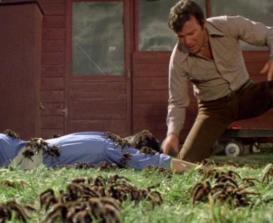No filme O Império das Aranhas (1977), o personagem de William Shatner (sim, o capitão Kirk!) é um veterinário que relaciona a morte de animais aos ataques de aranhas assassinas.