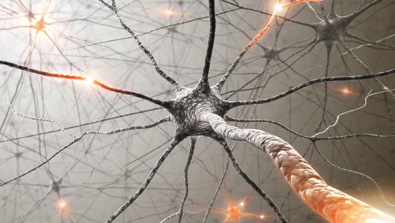 Os neurônios se regeneram? | Super