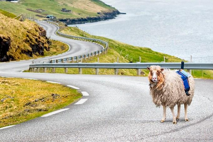 Divulgação   Visit Faroe Islands